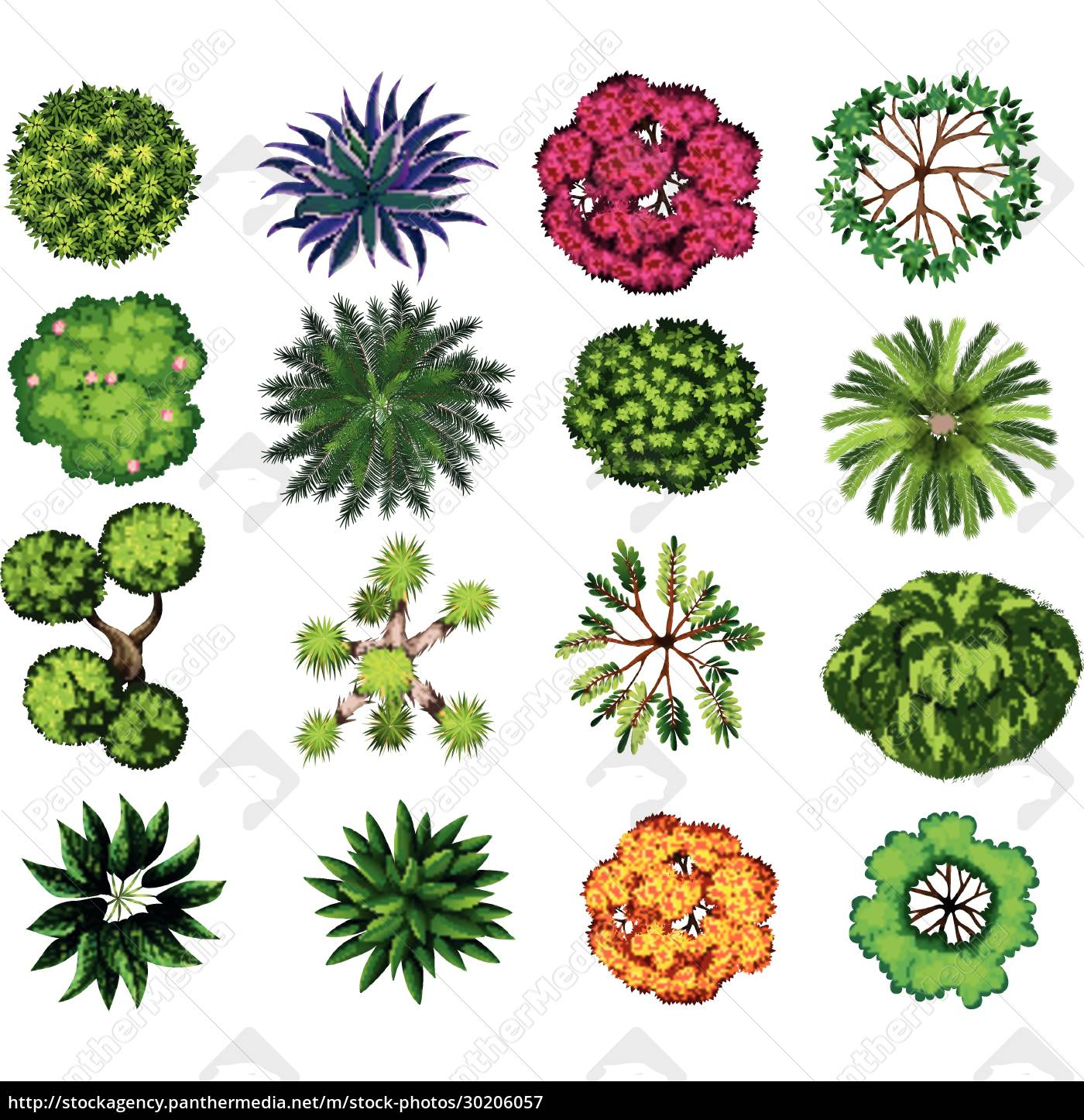 different, kind, of, plants - 30206057