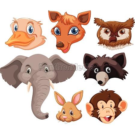 set, of, wild, animals, head - 30206380
