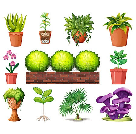 set, of, different, plants, in, pots - 30211677