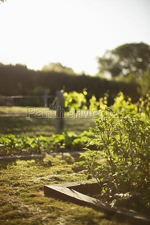 plants, growing, in, sunny, idyllic, summer - 30219047