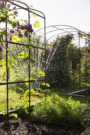 sprinkler, watering, plants, and, flowers, in - 30219075