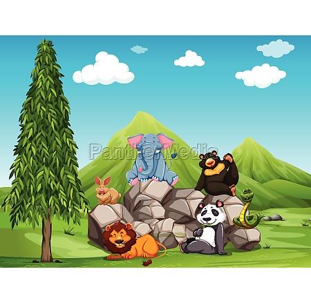 animals - 30238573