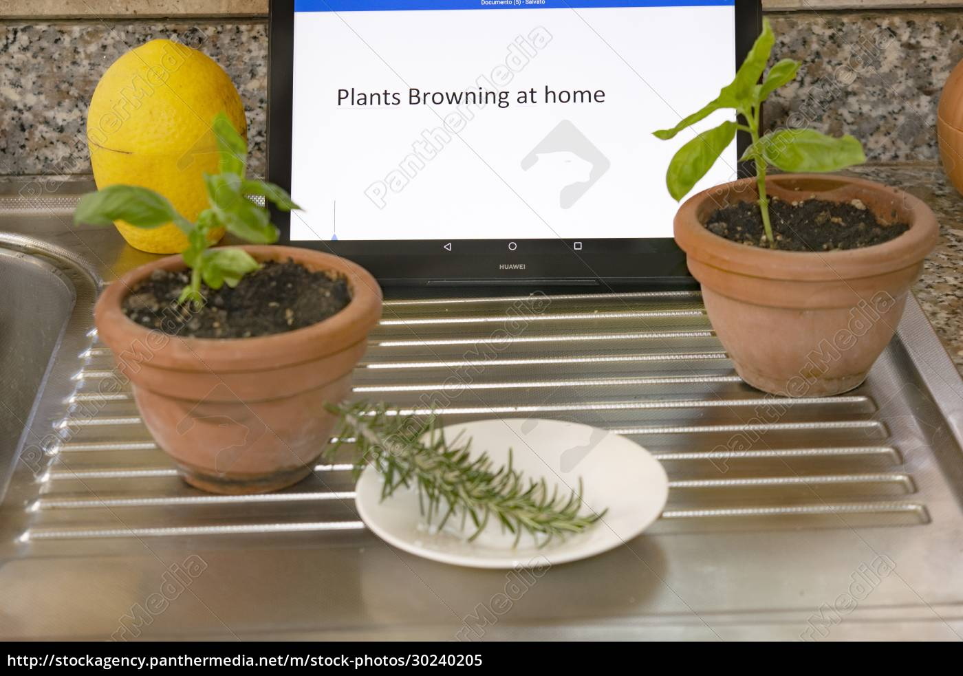 plants, browning, at, home - 30240205