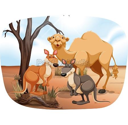 animals - 30244668