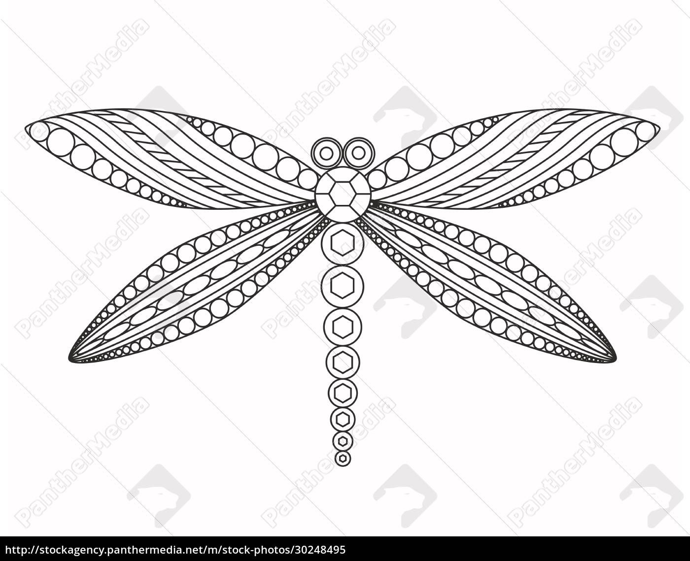 dragonfly, , vector, graphic, illustration. - 30248495