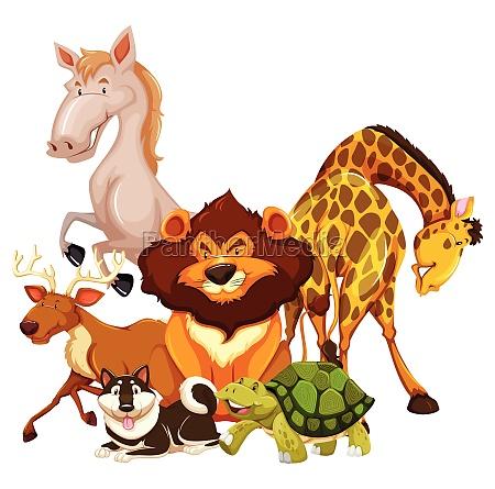animals - 30260890