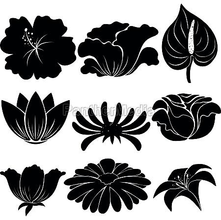 black, plants - 30260307