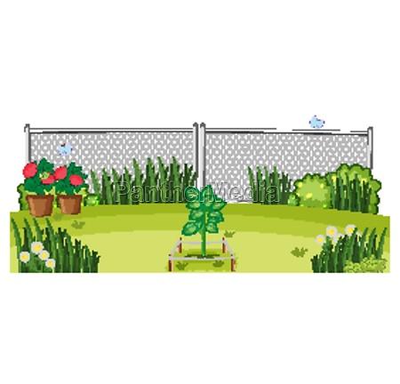 outdoor, plants, garden, scene - 30262031