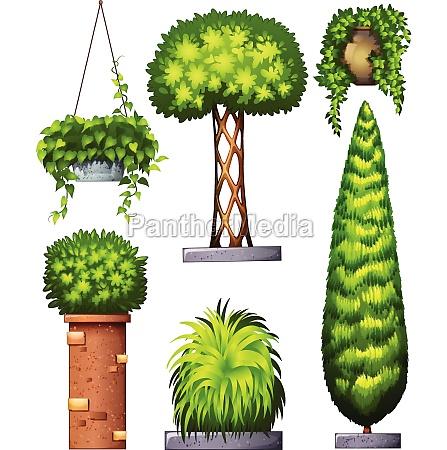 different, decorative, plants - 30263009