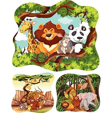 wild, animals, in, forest - 30271172
