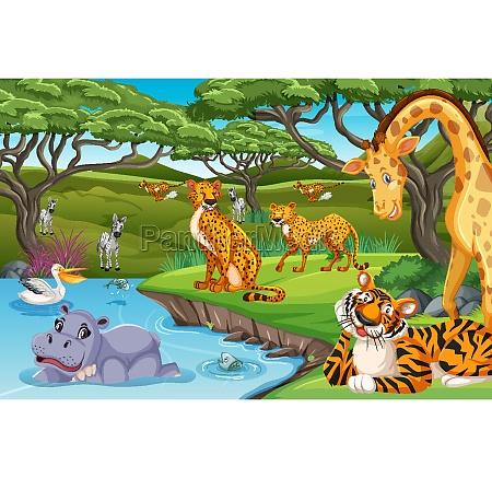 wild, animals, in, the, jungle - 30275972