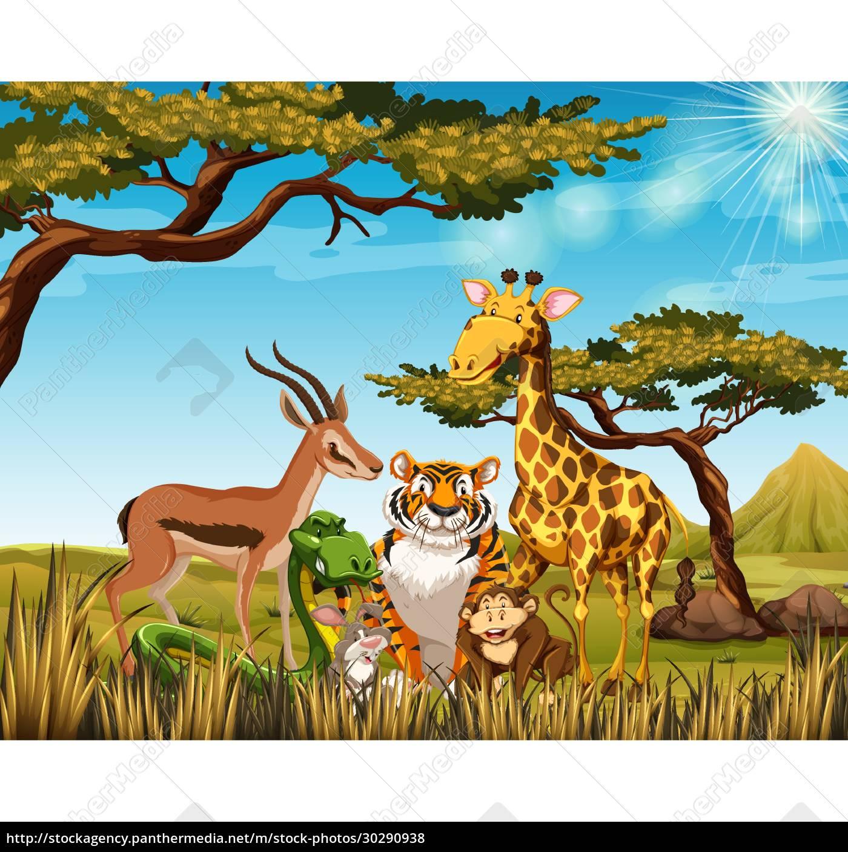 wild, animals, in, the, savanna, field - 30290938