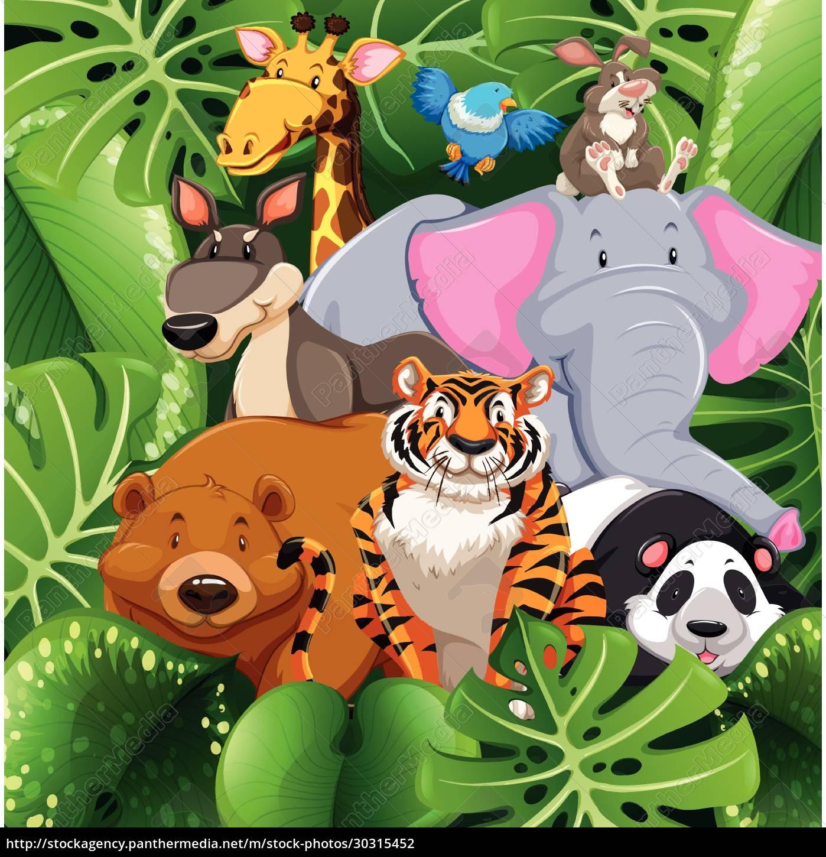 wild, animals, in, the, bush - 30315452