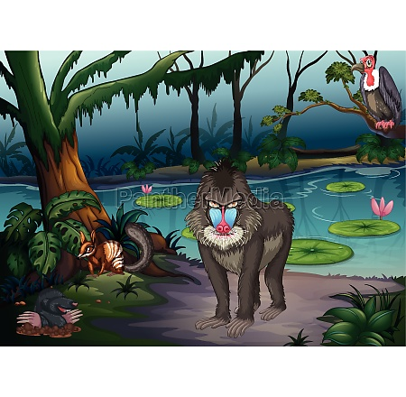 animals, and, pond - 30485510