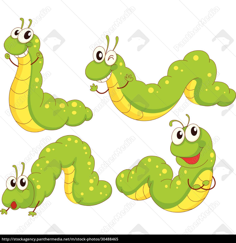vier, grüne, raupen - 30488465