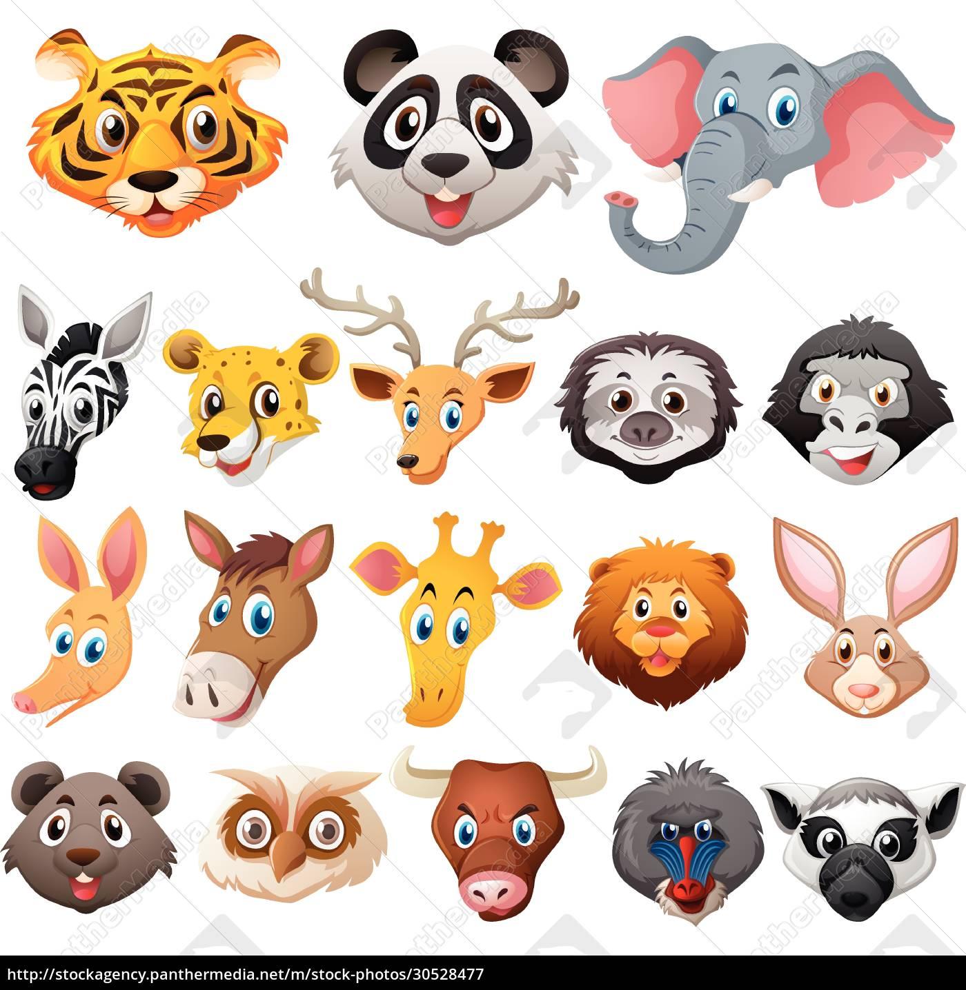 different, faces, of, wild, animals - 30528477