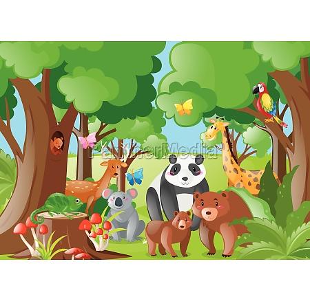 wild, animals, in, the, jungle - 30528532