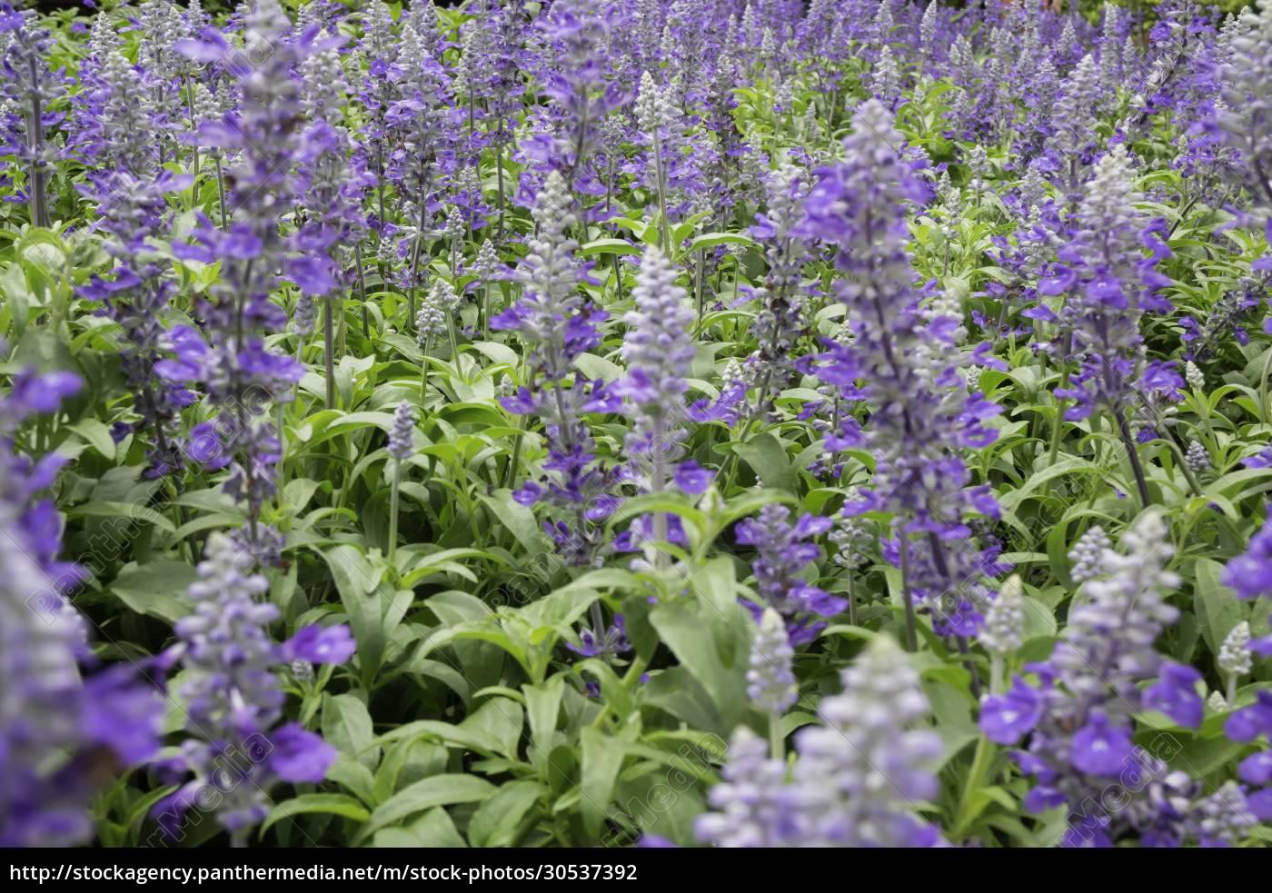 garden, plants, nature, background, , of - 30537392