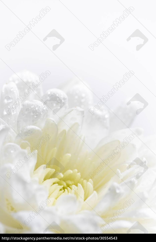 still, life, of, flowers, on, white - 30554543