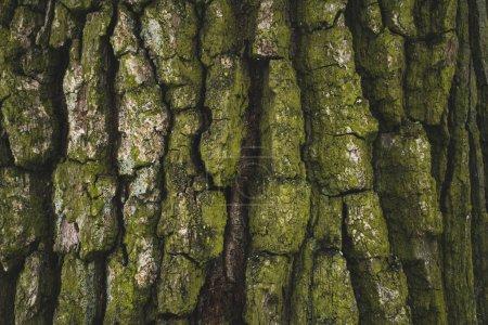 grün, Hintergrund, niemand, Zeichen, im Freien, Natur - B182239946