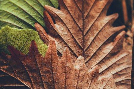 grün, Farbe, Hintergrund, Nahaufnahme, Makro, Saison - B175254504