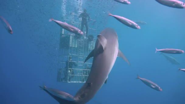 meer fisch ozean unterwasser tauchen hai