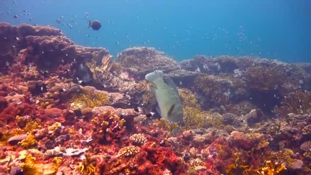 wasser meer tropisch fisch ozean unterwasser