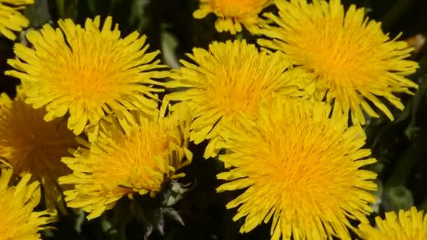 gelb nahaufnahme tag natur fruehling anlage