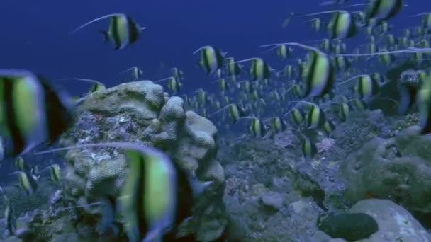 bunten ozean abenteuer erforschung salzwasser riff
