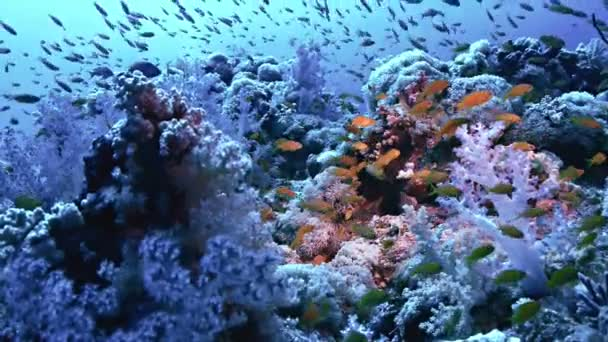 wasser fisch unterwasser tauchgang salzwasser riff
