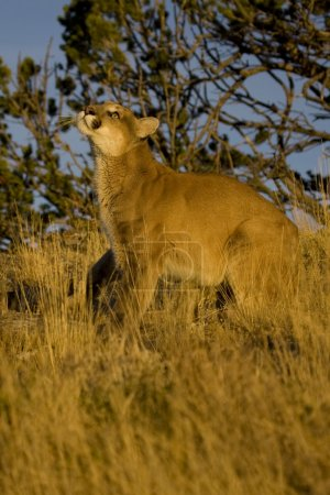 natur aktion berg gehen tiere tierwelt