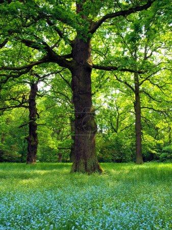 gruen gelb weiss blau hintergrund gras