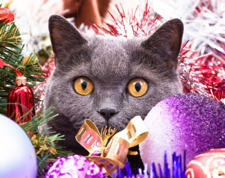 schauspiel rot weihnachten dekoration urlaub saison