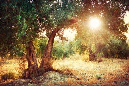 Hintergrund, Aussicht, Design, Kunst, Sonne, im Freien - B29985369