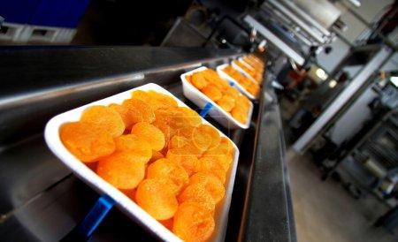 brennpunkt leute sonne pflanze orange gesund