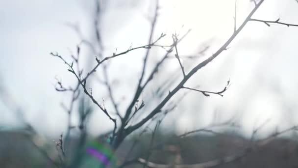 Video B195921384
