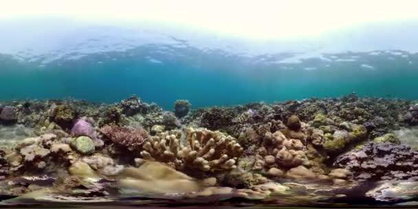 farbenfroh natur wasser meer tierwelt tropisch