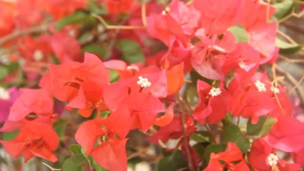 rot farbenfroh bernstein dekoration fruehling bluete