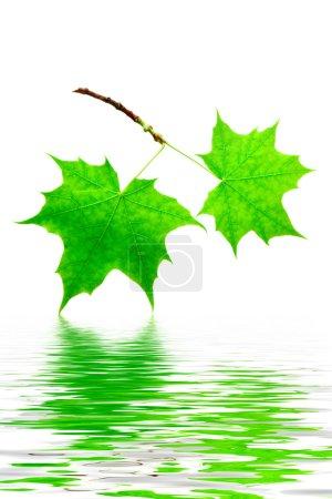 grün, Farbe, weiß, Hintergrund, Lebendig, Isoliert - B5079346