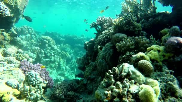 farbenfroh natur wasser tier meer tropisch