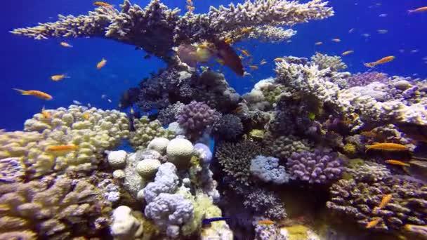 meer fisch ozean tauchen AEgypten korallen