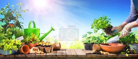 grün, Halten, Sonne, im Freien, Frühling, Umwelt - B463100390