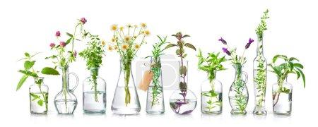 weiß, Glas, Gesundheit, Natur, Frisch, Kräuter - B481383570