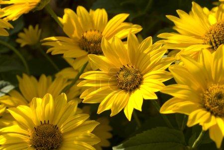 grün, Farben, gelb, Hintergrund, farbenfroh, Design - B6863336