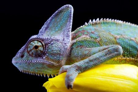 gruen farbe bild gelb beschreibend farbenfroh