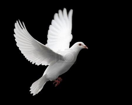 Bild, weiß, Hintergrund, Isoliert, Gesundheit, Freiheit - B6537396